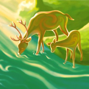 deers-thirst-for-water