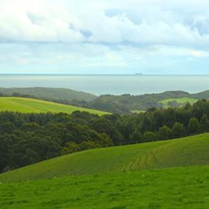 Grassland near Victoria, Australia