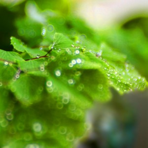 My fern with water drops