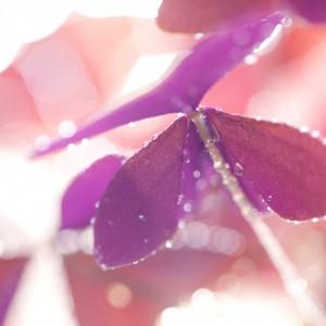 butterfly-flower-3