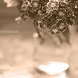 jar-of-flowers