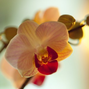 low-light-orchid