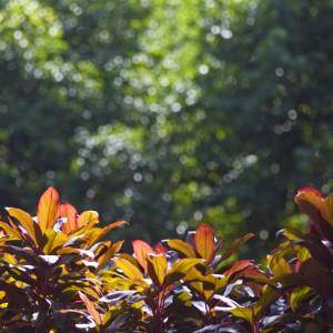 plants-backlight