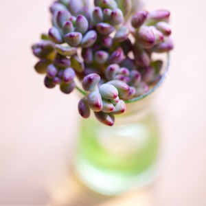succulents-glass