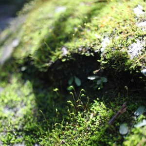 wild-moss